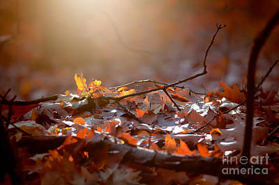 Photograph - Autumn 3 by Ines Schoenherr - Photographies and  More