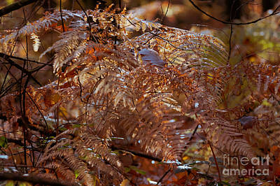 Photograph - Autumn 4 by Ines Schoenherr - Photographies and  More