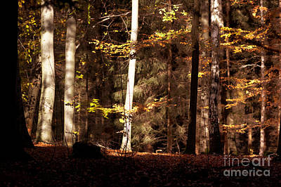 Photograph - Autumn 6 by Ines Schoenherr - Photographies and  More