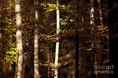 Photograph - Autumn 7 by Ines Schoenherr - Photographies and  More
