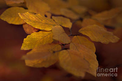 Photograph - Autumn 9 by Ines Schoenherr - Photographies and  More