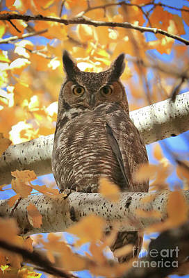 Photograph - Autumn Afternoon Owl by Carol Groenen