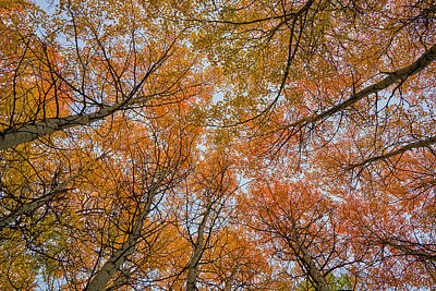 Photograph - Autumn Aloft by TL Mair