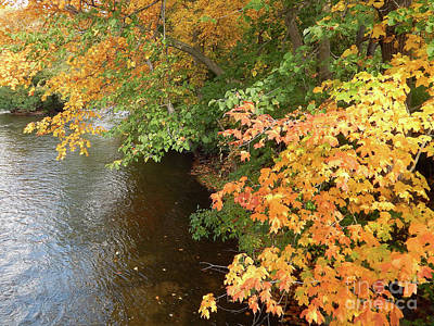 Photograph - Autumn Along The Huron River by Phil Perkins