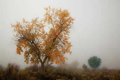 Autumn Along The Puerco River, Northern Arizona Original