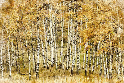 Photograph - Autumn Aspen by Brad Allen Fine Art