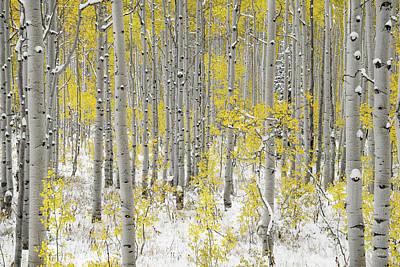 Photograph - Autumn Aspens 5 by Leland D Howard