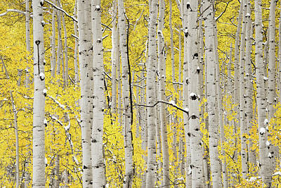 Photograph - Autumn Aspens 6 by Leland D Howard