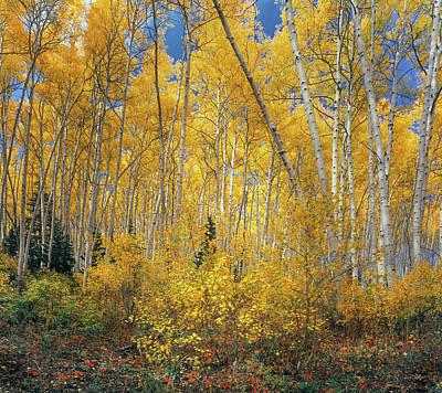 Photograph - Autumn Aspens by Leland D Howard