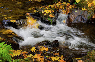 Photograph - Autumn At Clear Creek by Steph Gabler