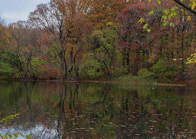 Photograph - Autumn At Prospect Park by Traci Asaurus