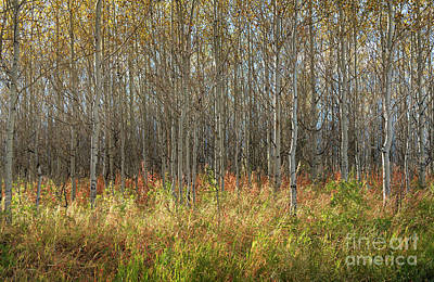 Photograph - Autumn Blaze by Sandra Bronstein