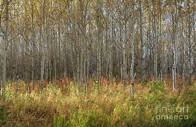 Photograph - Autumn Blaze by Sandra Bronstein