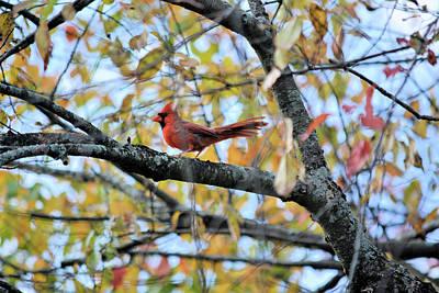 American West - Autumn Cardinal by Karen Majkrzak