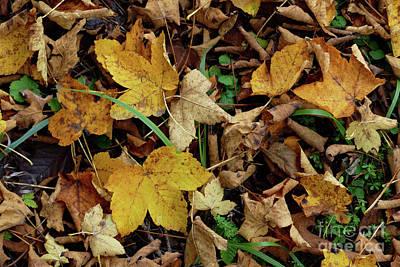 Photograph - Autumn Carpet by Phil Banks