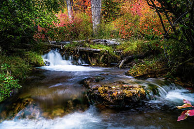Photograph - Autumn Cascades by TL Mair