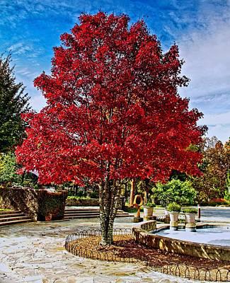 Photograph - Autumn Celebration by Allen Nice-Webb