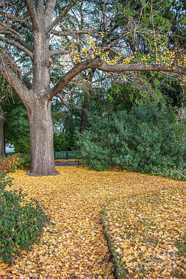 Photograph - Autumn Colors - Capitol Grounds by Dale Powell