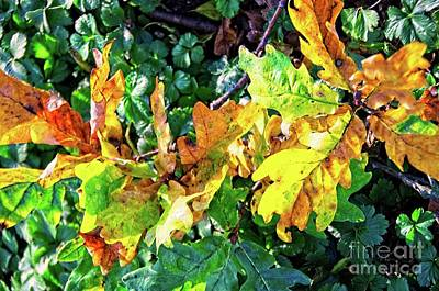 Photograph - Autumn Colors by Elzbieta Fazel