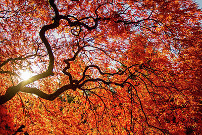 Photograph - Autumn Colors In Japanese Garden by Kunal Mehra