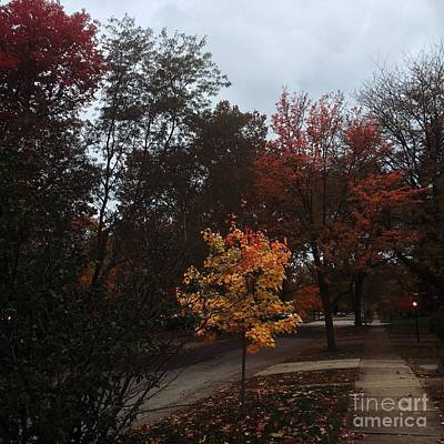 Frank J Casella Royalty-Free and Rights-Managed Images -  Autumn Colors in the Neighborhood by Frank J Casella