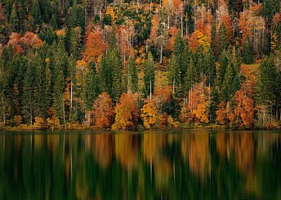 Photograph - Autumn Colors by Nedjat Nuhi