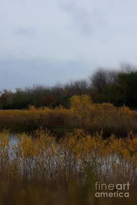 Frank J Casella Royalty-Free and Rights-Managed Images - Autumn Colors on the Wetlands by Frank J Casella