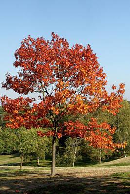 Photograph - Autumn Colours In Greenwich Park, London by Aidan Moran