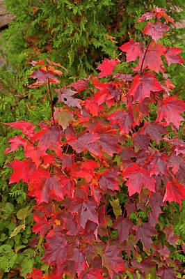 Photograph - Autumn Combo by Paul Mangold