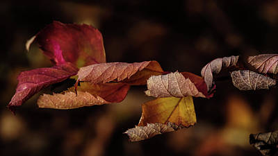 Photograph - Autumn Curls by Glenn DiPaola
