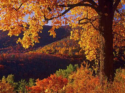 Photograph - Autumn Deciduous Forest, Shenandoah by Tim Fitzharris/ Minden Pictures