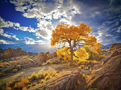 Photograph - Autumn Desert by Martin Gollery