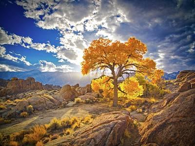 Photograph - Autumn Desert by Martin Gollery