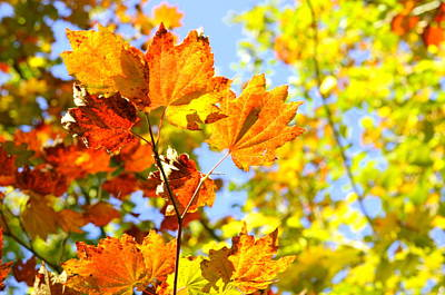 Photograph - Autumn Display by Tikvah's Hope
