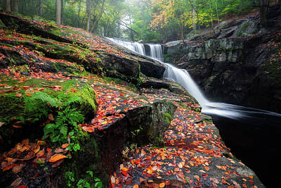 Photograph - Autumn Falling 3 by Bill Wakeley