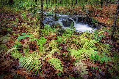 Photograph - Autumn Fern by Bill Wakeley