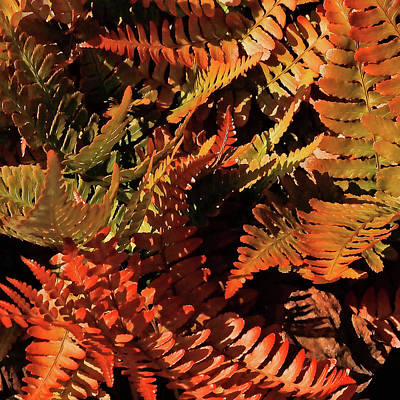 Photograph - Autumn Ferns by HH Photography of Florida