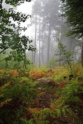 Marvelous Marble - Autumn fog  by Chance Kafka