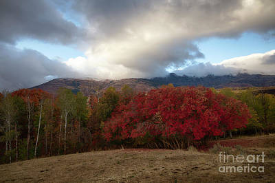 Photograph - Autumn Foothills by Idaho Scenic Images Linda Lantzy