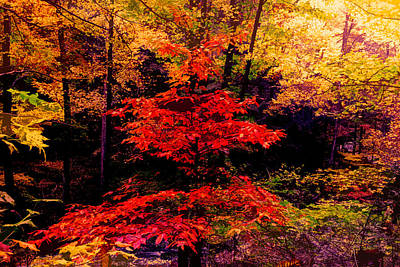Photograph - Autumn Forest Abstract by Debra and Dave Vanderlaan