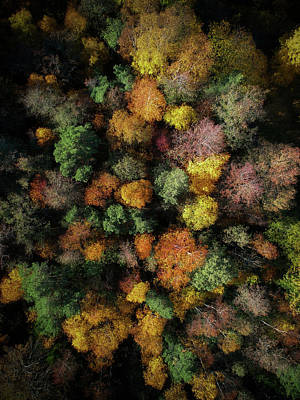 Fall Foliage Wall Art - Photograph - Autumn Forest - Aerial Photography by Nicklas Gustafsson