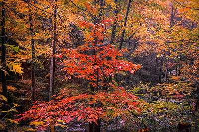 Photograph - Autumn Forest Afternoon by Debra and Dave Vanderlaan