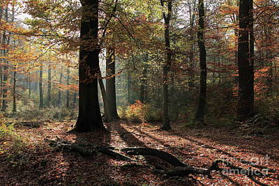 Photograph - Autumn Forest by Eva Lechner