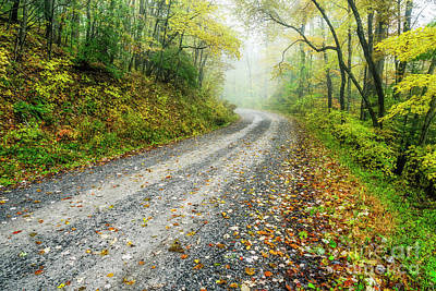 Photograph - Autumn Forest Service Road by Thomas R Fletcher