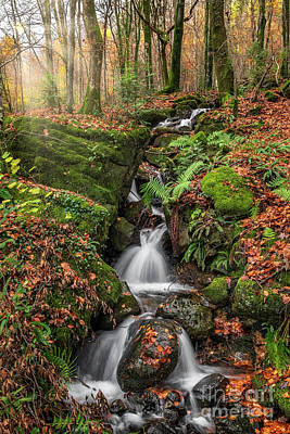 Photograph - Autumn Forest Stream by Adrian Evans