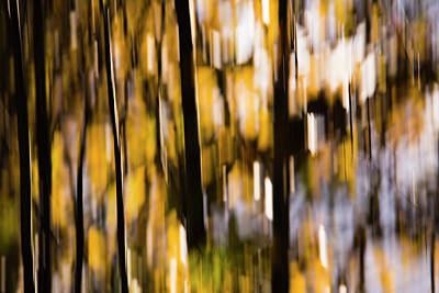 Photograph - Autumn Forest by Yulia Kazansky