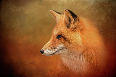Photograph - Autumn Fox by Kelley Parker