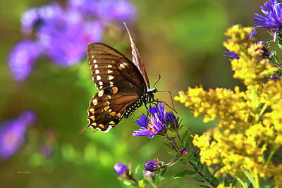 Photograph - Autumn Garden Butterfly by Christina Rollo