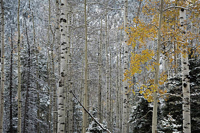 Photograph - Autumn Gives Way To Winter by Ron Weathers