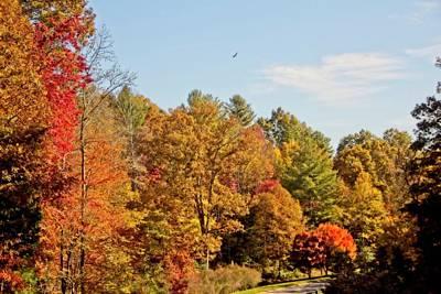 Photograph - Autumn Glow by Allen Nice-Webb